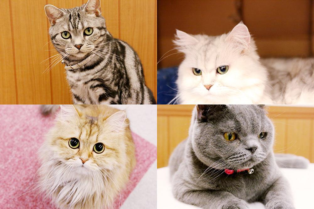 猫カフェ_品2